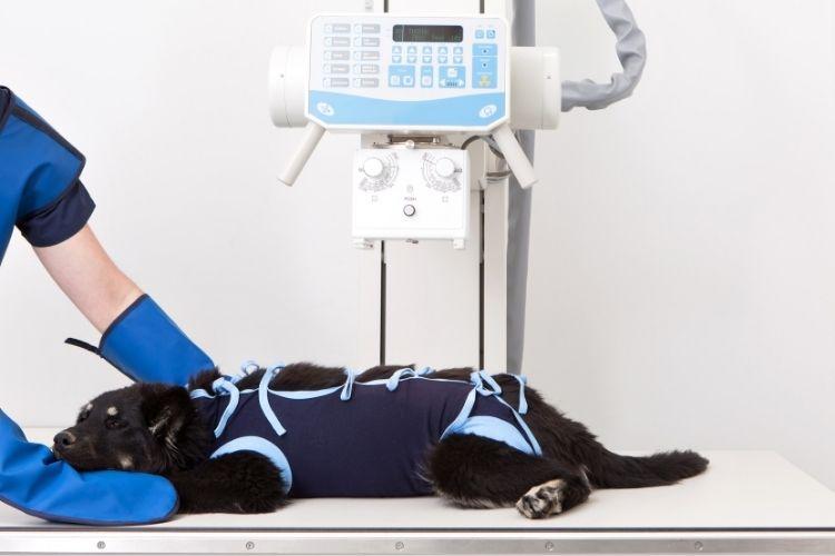 Ways To Lower Radiation Exposure in Your Veterinary Practice