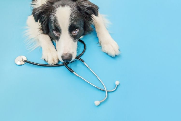 Veterinary Equipment You Need To Set Up a New Practice